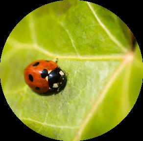 Afavorim la biodiversitat en el camp